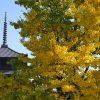 東寺には、指輪の形のお守りがあるってホント?御朱印についてもご案内!